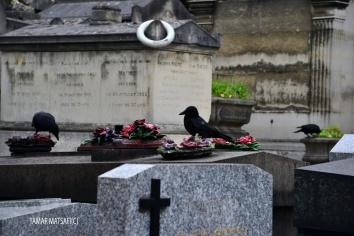 Père Lachaise Cemetery _02