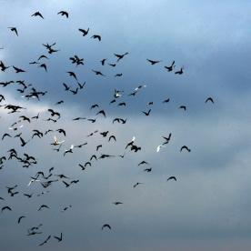 birds in the sky_01
