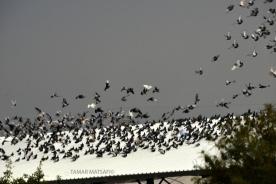 birds in the sky_04