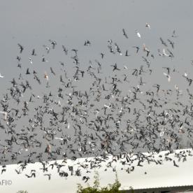 birds in the sky_05