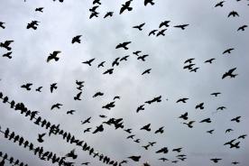 birds in the sky_06