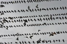 birds in the sky_07