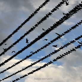 birds in the sky_08