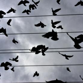 birds in the sky_09