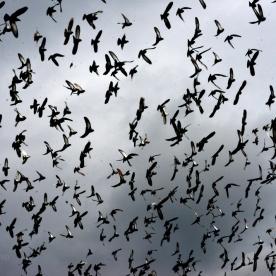 birds in the sky_10