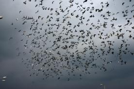 birds in the sky_11