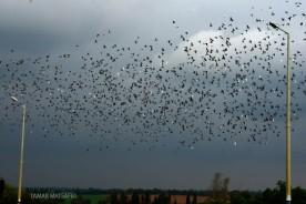 birds in the sky_12